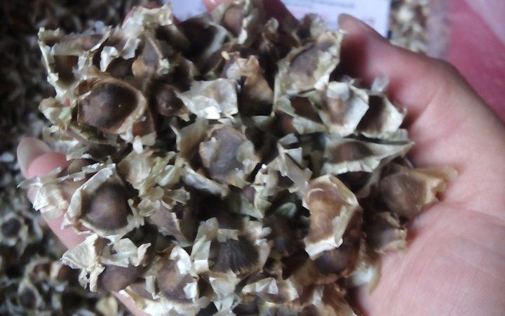 Phòng chống bệnh và bổ sung dinh dưỡng từ hạt chùm ngây